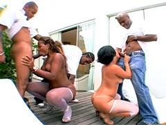 Big ass ebony chicks sucking big black dicks before hot fucking